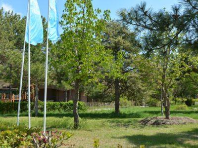Парк рядом с хостелом Малибу