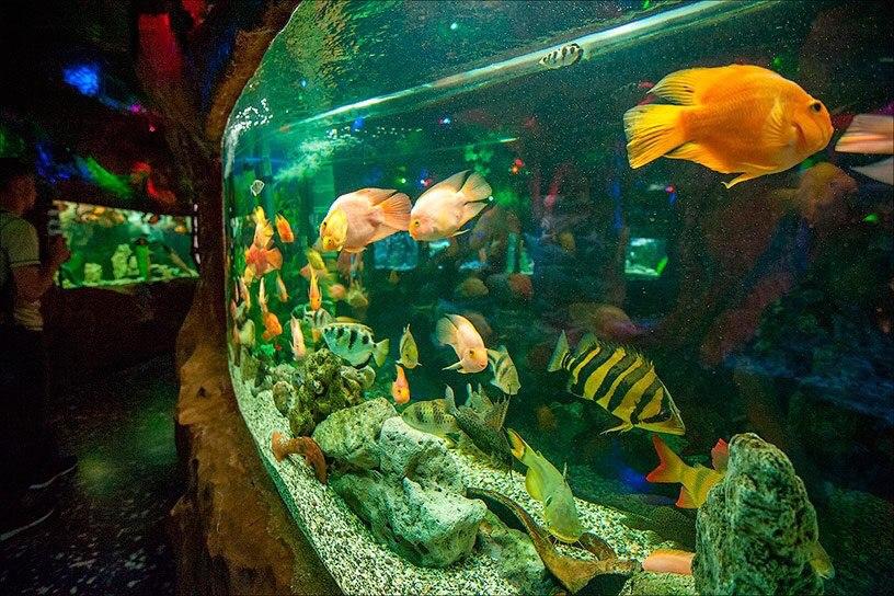 Рыбки в аквариуме в Евпатории